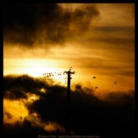 Bird On A Wire by fluffyvolkswagen