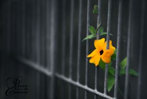 Caged by PassionAndTheCamera