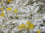 Lichen-covered stone by AeonOfTime