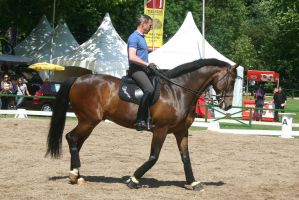 Dressage Riding Competition Stock by LuDa-Stock