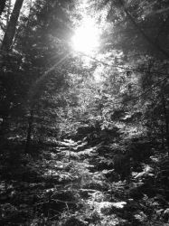 Sun Through Hemlocks by JordanJssp