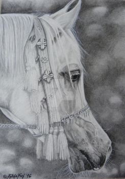 Arabian Stallion - Charcoal Drawing by theArtofsilviafrei