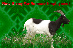 Now Hiring for Summer Employment by LoloAlien