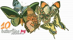 10 butterflies png by ANGOOY