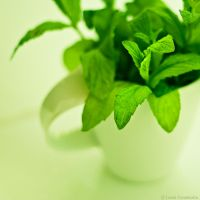 Mentha by LuciaConstantin