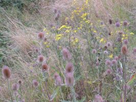 Teasel Country by moonhare77