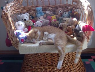 My cat and the teddy bears by Badty92