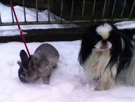 Winter bunny - Winter dog by casualGEE