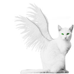 White Winged Kitty PNG Stock Green Eyes by vamp1967