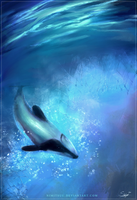 -- [ Moment of Calm ] Hector's Dolphin -- by Nimiszu