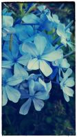 I love blue flowers! by loveautumnandnature