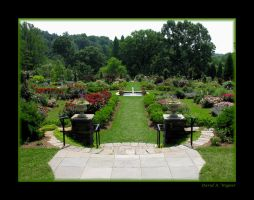 Rose Garden I by David-A-Wagner