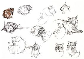 Cats by Wolkie