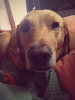 Sadie Sue Shagbottom - The Nose by KWilliamsPhoto