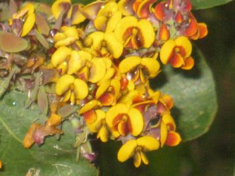 Unknown plant flowers close-up by Webseer