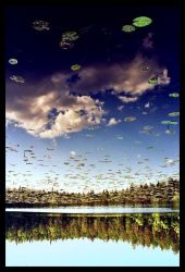 Water Lilies can be UFOs by biskui