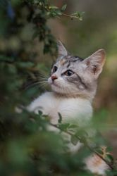 Portrait of a young kitten by luka567