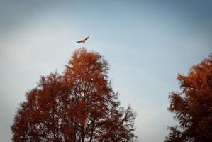 Hovering above the tree tops by steppeland