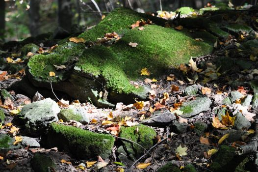 Moss and Leaves - 2013 by insanity-pillz