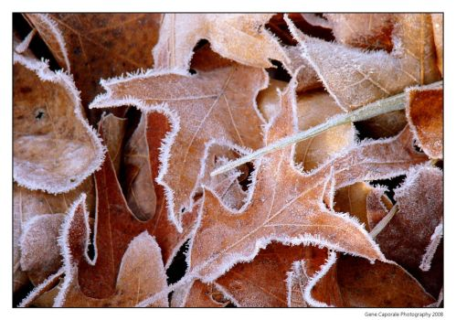 Ice Crystals on fallen leaves by 1minddoctor