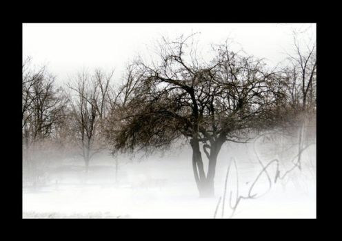 From the Mist by Sabis
