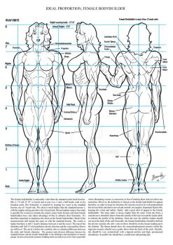 Female Muscle Ideal Proportion