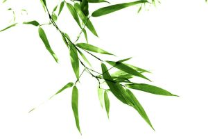 Bamboo Leaves by Mechanismatic