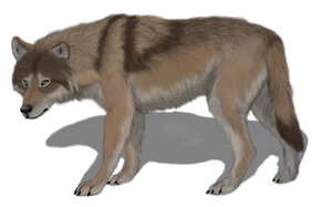 Canis lupus maximus by AnonymousLlama428