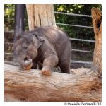 Baby Elephant: Looking Cute II by TVD-Photography