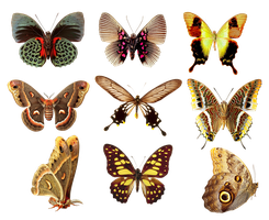 Butterflies2 png by AbsurdWordPreferred