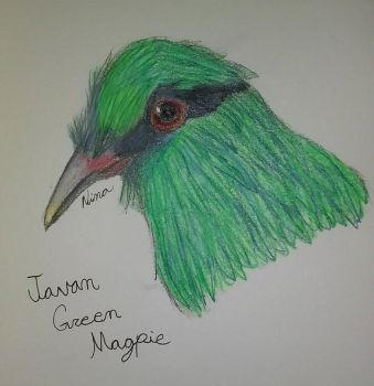 Javan Green Magpie  by GreenWingSpino32