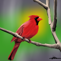332 - Red Cardinal by Shasel