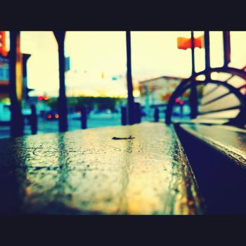 Bus Bench by candacepalmer