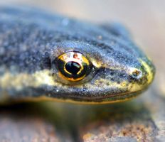 Eye of Newt 2 by priwax