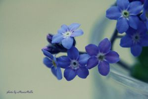 Forget-me-not. by MelissaBalkenohl