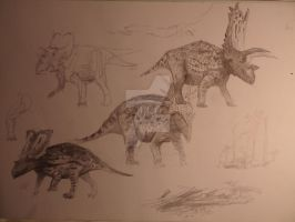 Ceratopsian sketches by Lucas-Attwell