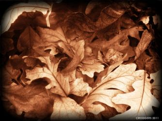 Fallen Leaves by aphidity21