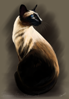 Siamese by Martith