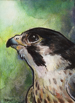 aceo for siluan by kailavmp