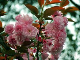 A little bit of Spring by WhiteBook