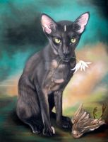 Oriental Shorthair Vita Finished by mo62