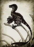 Novaraptor by Aliveful