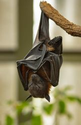 Flying Fox 02 by NellyGraceNG