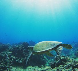 Turtle by Raulboy