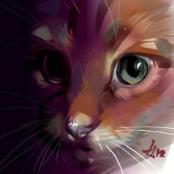 Red cat by LimKis