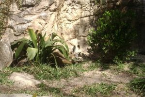 San antonio zoo picture 27 by Inya-spring