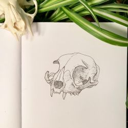 Inktober 8: Ye Olde Cat Skull by Alithographica