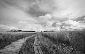Trails by PassionAndTheCamera