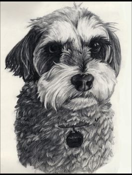 Snickers Portrait by ALRadeck