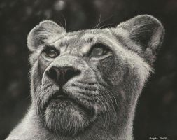 Lioness (pastels) by AngelaMaySmith